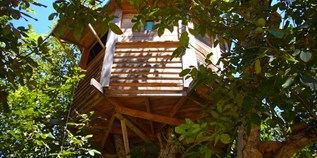 Luxuscamping - The Walnut Tree Farm Treehouse
